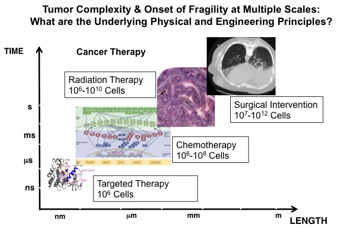 multiscale_cancer1